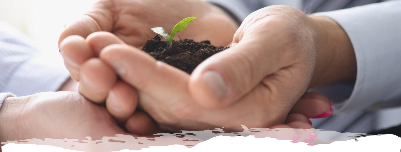 Manos con planta creciendo